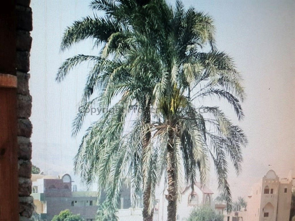 W0117 - Nile view apartment for sale in El Ramla - Outview